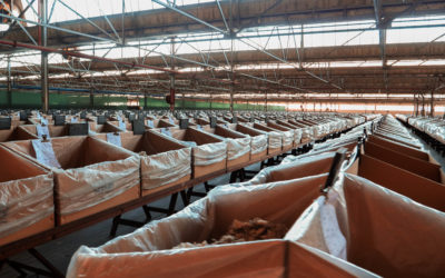 Wool and Mohair Virtual Plant Tour with BKB Limited – 17 September 2021